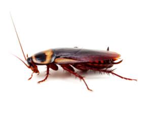 roach control in Bakersfield CA