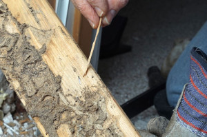 Termite Pest Bakersfield, Bakersfield Pest Control Service, Bakersfield Pest Control Company, Pest X