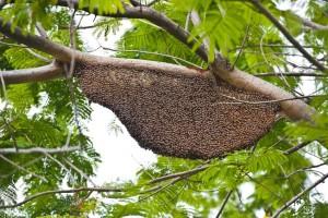 Bee Control Bakersfield CA