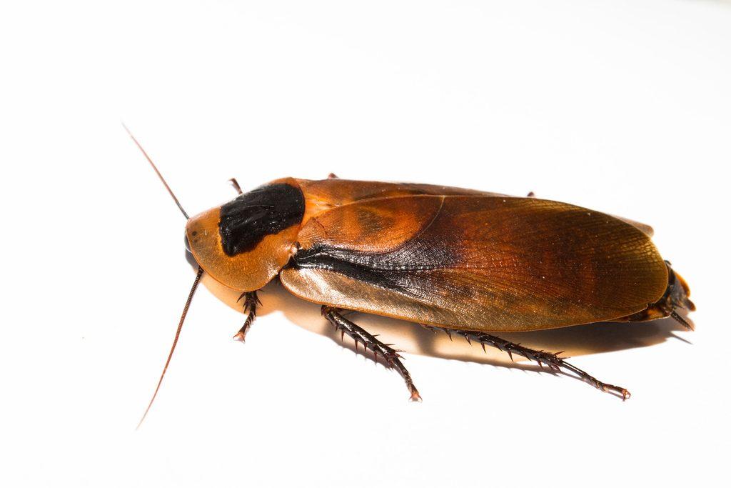 Bakersfield Pest Control, Pest Control Bakersfield, PestX