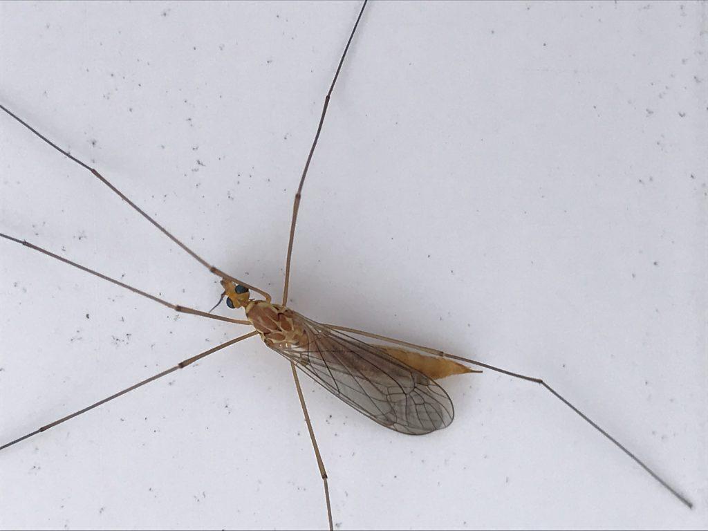 Bakersfield Pest Control, Pest Control Bakersfield