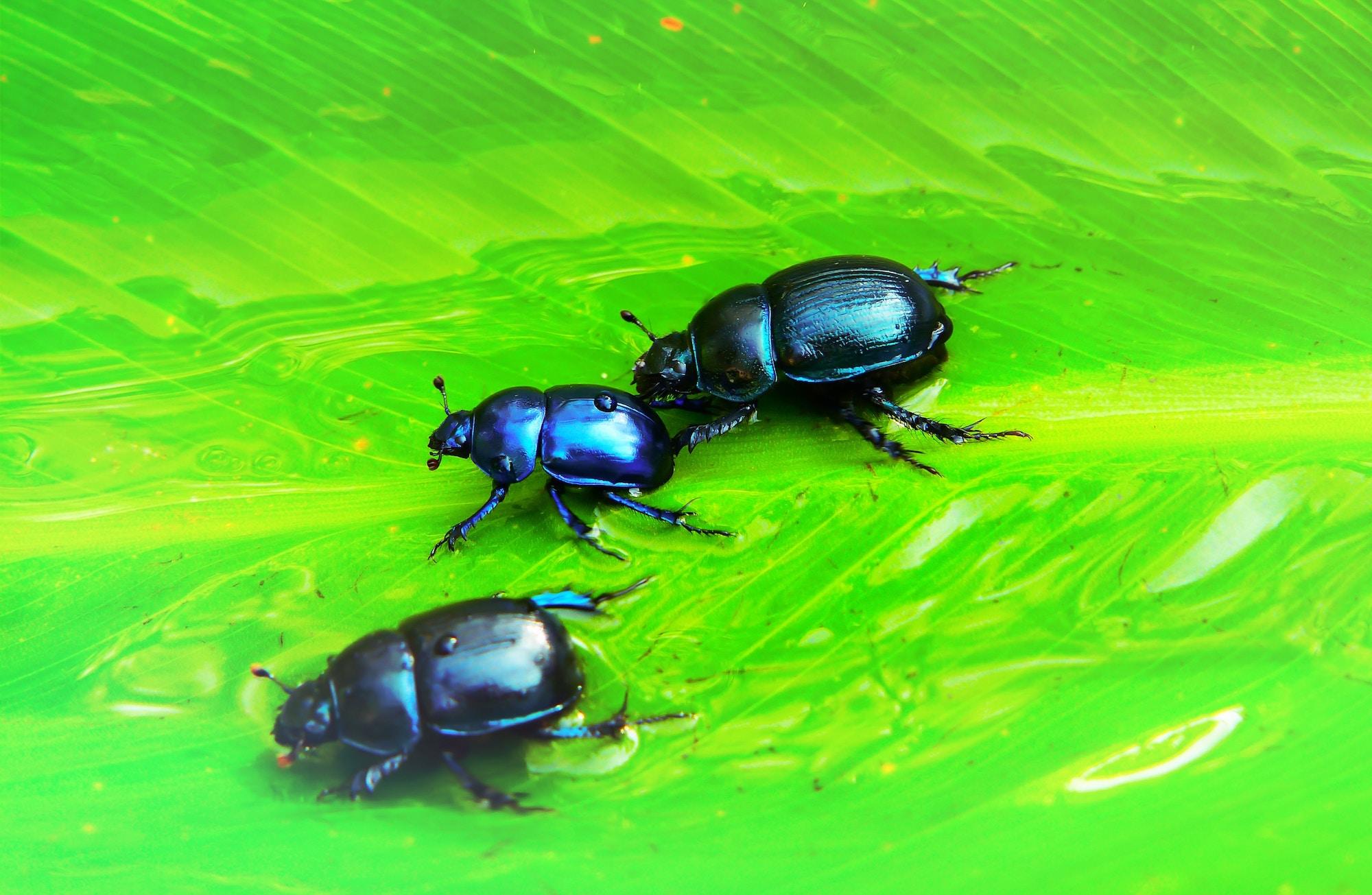 Bakersfield Pest Control Services, #1 Termite Extermination & Pest Control Company, PestX