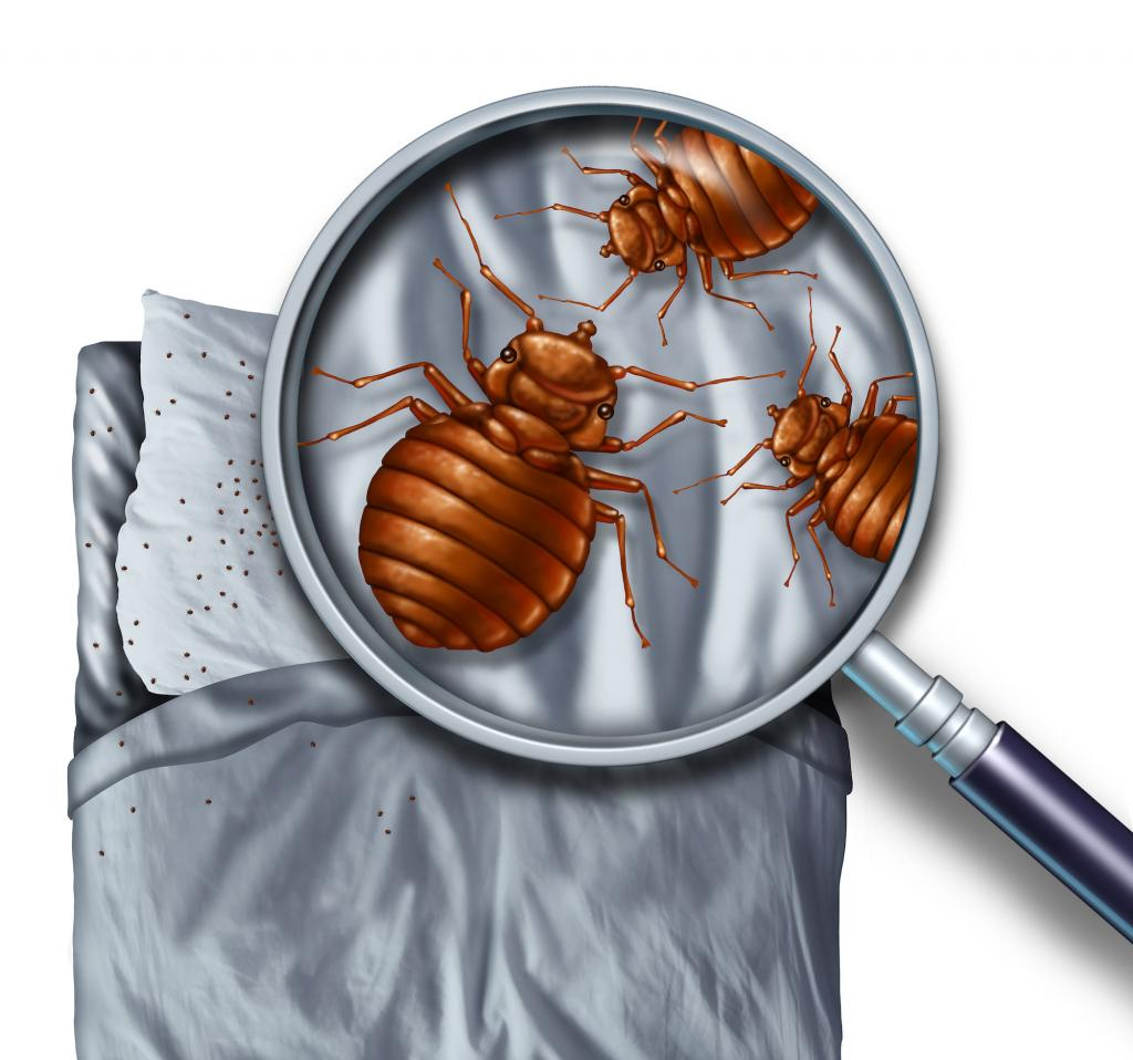 Pest control Bakersfield, bed bugs Bakersfield