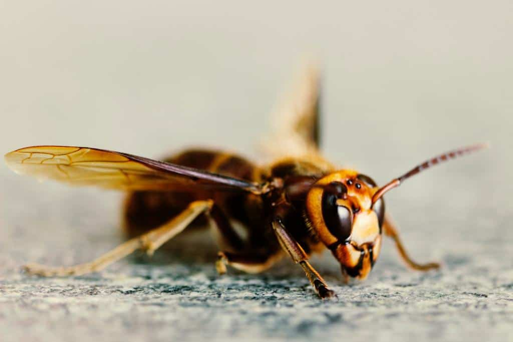 Bakersfield Pest control, Pest control services