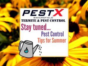 Pest control Bakersfield, Bakersfield pest control