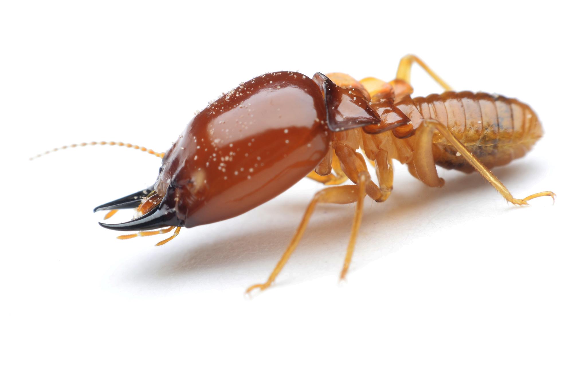 Pest Control Bakersfield, Bakersfield Pest Control Companies, PESTX