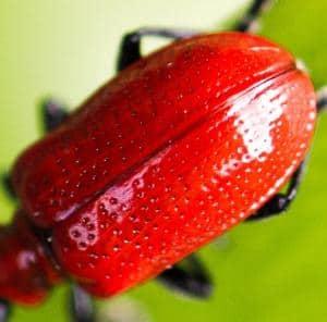 Bakersfield Pest Control, Affordable Pest Control Bakersfield, PESTX