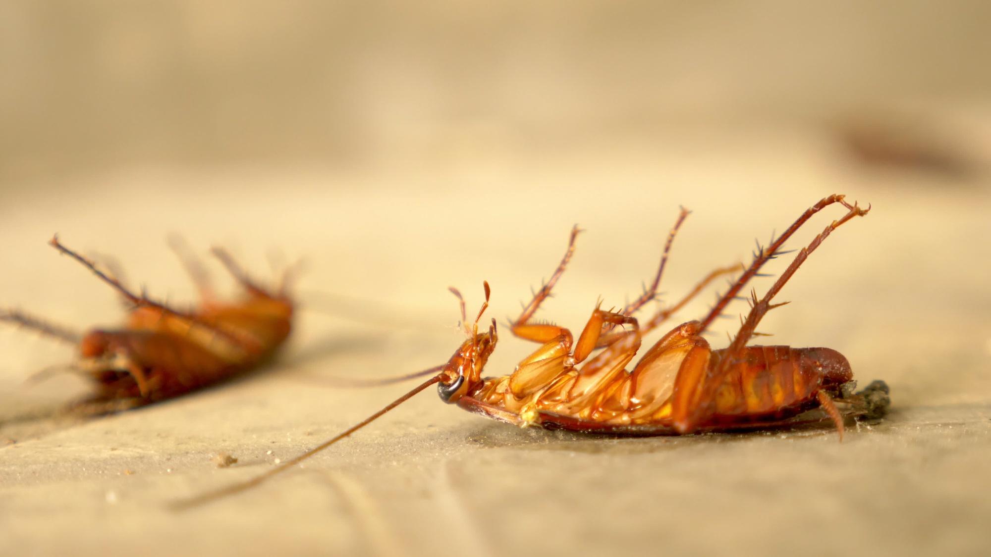 Cockroach pest control in Bakersfield, Bakersfield pest control