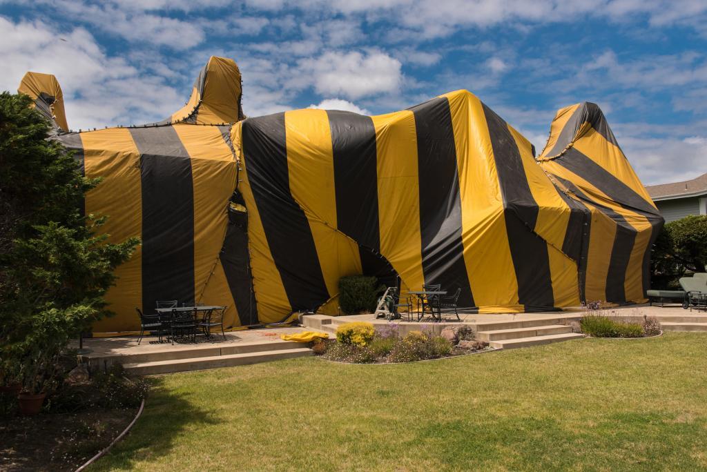 Pest Control in Bakersfield, #1 Bakersfield termite Pest Control Company, PESTX